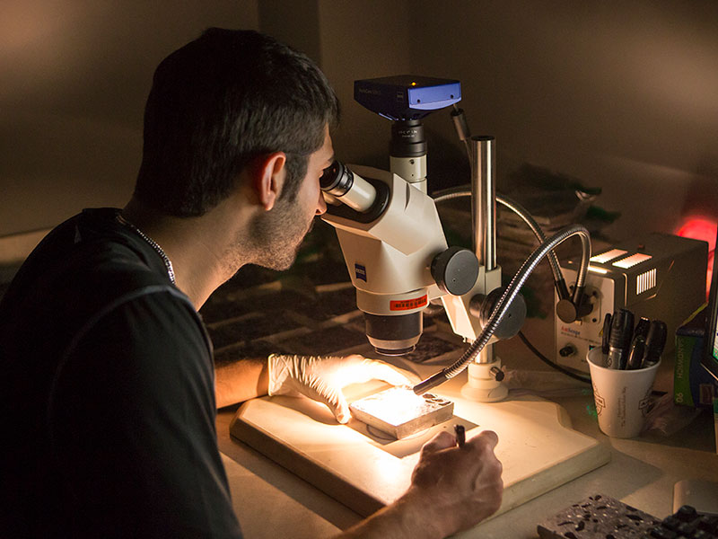 A student looks into a microscope.